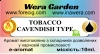 TOBACCO CAVENDISH TYPE